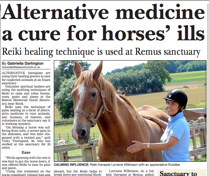 reiki forhorses article